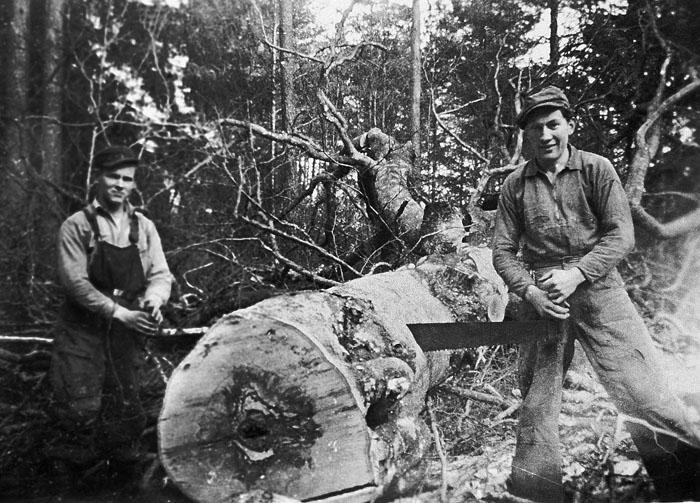 Skogsarbete 1943