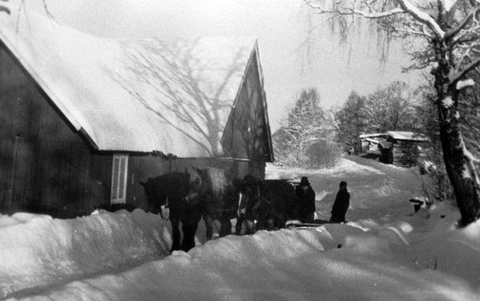 Snösvängen med hästar